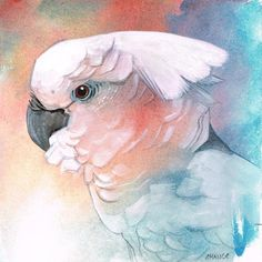 DPW Fine Art Friendly Auctions - No. 34 Cockatoo by Annabel Chance