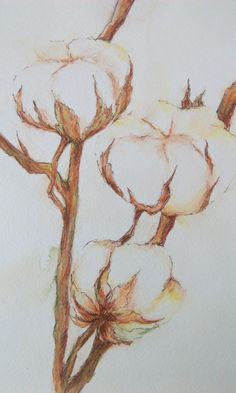 #cotton #бавовна #хлопок #декордлядома #акварель #watercolor