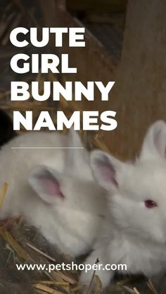 Female rabbits are so sweet! Bunnies are ideal pets due to gentle nature! If you decided to have a girl bunny pet, we've picked out some cute and top names for girl bunny to match their sweet temperament. I hope you will choose the best which you think reflects her personality! #BunnyNamesForGirl #GirlBunnyNames #BestBunnyNamesForGirl #FemaleBunnyNames #FemaleRabbitNames #cutebunnynames #cutegirlbunnynames #bunnynames #RabbitNames