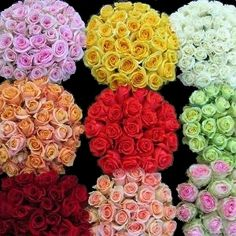 FiftyFlowers.com - Wholesale Bulk Roses 200 Stems Your Colors  Green Rose called Limbo.
