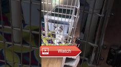 😸 Video of adoptable pet named Skyler 🐶 Skyler is an adoptable pet with Ritchie County Humane Society Inc in Harrisville WV Please visit…