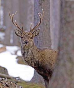 wildlife-photography.uk.com