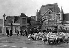 chicago stockyards 1905