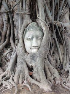 Wat Phra Mahathat, Ayutthaya, Thailand | www.lilistravelplans.com Bangkok, Ayutthaya Thailand, Thailand Photos, Tree Roots, Asia Travel, Thailand Travel, Wanderlust Travel, Visit Thailand, Science And Nature