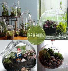 Terrarium DIY - materials needed: jar, shovel, assorted plants, potting soil, small stones, activated charcoal.