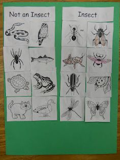 Lesson 7:Insects- previous week was classify