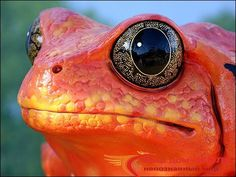 Картинки по запросу жаба помидор