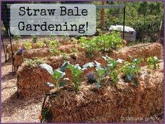 Straw Bale Gardening: An Easy Way To Grow Food