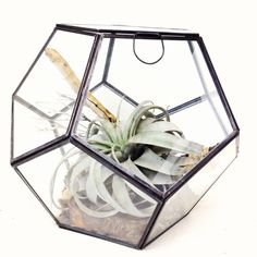 Image of terrarium (11H 11W 11D) (sold out.) good working photo. 205