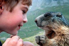 Трогательная дружба австрийского мальчика с сурками