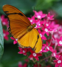 Photos: Blooming Butterflies at Olbrich : Ct