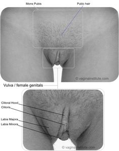 Haifa wehbe masturbate
