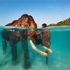 Swimming Elephant - Andaman Islands India by epic_underwater Photo Elephant, Elephant Love, Elephant Bath, Asian Elephant, Bull Elephant, Baby Elephants, Underwater Photos, Underwater Photography, Photography Ideas