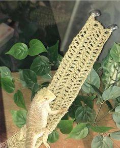 SWING STYLE: Reptile Hammock/ pet hammock/ bearded dragon hammock/reptile swing/ natural terrarium d Tarantula Habitat, Reptile Habitat, Reptile Room, Reptile Cage, Reptile Enclosure, Rabbit Cages, Reptile Supplies, Pet Supplies, Bearded Dragon Supplies