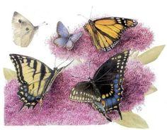 butterflies, Marjolein Bastin