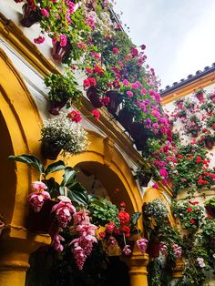 Andalucia, Beautiful Flowers, Bloom, Country, Travel, Viajes, Rural Area, Destinations, Country Music