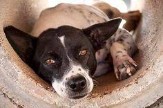 Animal Adoption, Pet Adoption, Feral Cats, Phuket Thailand, Helping The Homeless, Volunteers, Siblings, Type 1, Shelter