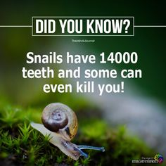 Interesting Science Facts, Amazing Science Facts, Interesting Facts About World, Amazing Facts, Wow Facts, Real Facts, True Facts, Weird Facts, Funny Facts