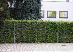Zaun Sichtschutzzaun Gitterzaun Und Hainbuchenhecke