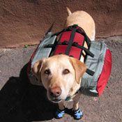 Dog Packs Hiking