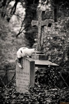 Two of my favourite things: cats & cemeteries! ∞ #passare #endoflifemgmt #death #livewell #planwell #leavewell #goodgrief #ease #trust #funeral #headstone #tombstone  #cemetery #LeaveWell #Death #RIP #graveyard #passage #passages
