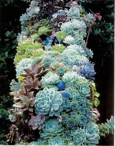 this planting is along a stairway, it is planted on chicken wire so it can be moved inside for the winter Tree Stump, Planting Succulents, Succulent Plants, Horticulture, Garden Art, Cabbage, Painted Pots, Clutter, Terrace