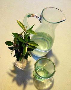 Estratto di foglie di olivo: benefici e preparazione