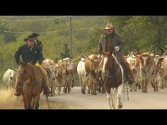 Cattle Drive - Try To Get There With As Many As You Left With : Video Clips From The Coolest One