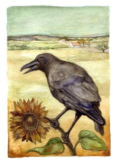 Raven is surveying it's Countryside whilst sitting on a Beautiful Sunflower! by Rima Staines