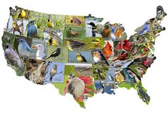 Neat! A US map puzzle with pictures of each state's state bird.