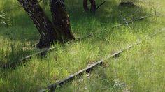 Natur-Park-Südgelände-Gleis