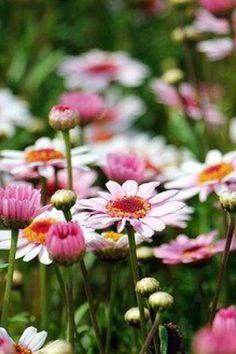 Gardening Magazines, Gardening Tips, Garden Guide, Aesthetic Images, Edible Garden, Vegetable Garden, Beautiful Gardens, Wild Flowers, Countryside
