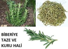 BİBERİYE MUCİZESİ! MUTLAKA OKUYUN.. Instagram Number, 2 Instagram, Face And Body, How To Dry Basil, Body Care, Health Fitness, Food And Drink, Herbs, Plants