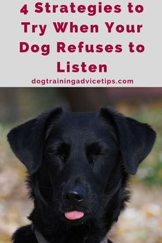 4 Strategies to Try When Your Dog Refuses to Listen   Dog Training Tips   Dog Obedience Training   Dog Training Ideas  via @KaufmannsPuppy