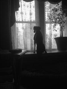 Black boxer dog-My little Selkie