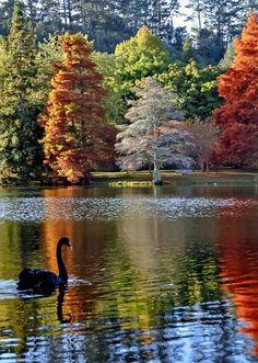 Amazing colors tree