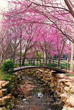 Ft. Worth Botanical Gardens......