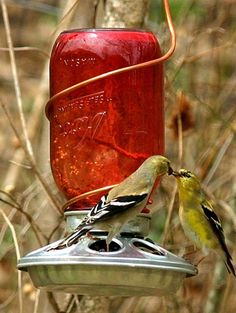 Mason jar + beautiful birds = perfection.