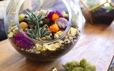 cactus y suculentas - Buscar con Google
