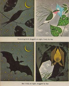 Day and Night illustration by Charley Harper From a 1960's biology book | Flickr - Photo Sharing!