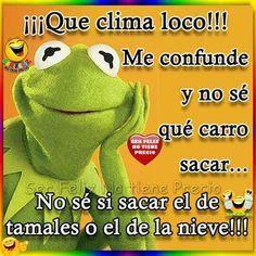 Clima loco Funny Qoutes, Funny Phrases, Funny Memes, Jokes, Funny Spanish Memes, Spanish Humor, Spanish Quotes, Mafalda Quotes, Diva Quotes