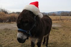 Merry Christmas from Vader and McMillan Farms Farms, Merry Christmas, Animals, Merry Little Christmas, Homesteads, Animales, Animaux, Wish You Merry Christmas, Animal