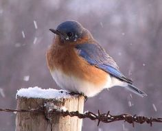 A lot of myths surround birds in the wintertime, but birds are actually well equipped to survive in the cold.