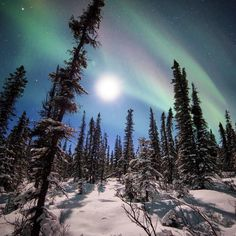 Bucket List: See the starry, starry nights over Denali National Park in Alaska. If you're lucky, you might even witness the northern lights dancing overhead. Photo of the Aurora Borealis at Denali National Park by Daniel Leifheit, National Park Service.