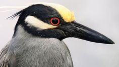 How to Photograph Birds With a Smartphone http://www.audubon.org/magazine/may-june-2016/how-photograph-birds-smartphone (via juice.li)