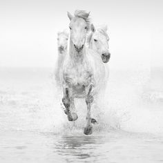 The White Horses of the Camargue Photography Tour. Famous for its beautiful wild white horses that roam the area, the Camargue is a haven for any lover of the