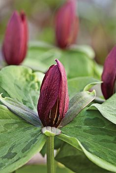 Learn about growing spring wildflowers and find 9 excellent types to try in your woodland garden.