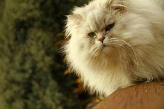 my cat #cat #kitty #cute