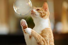 Bubble | by rampx