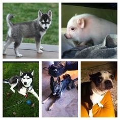 big time rush pets;; technically Yuma is Kevin Schmidt's not Kendall's but whatever.